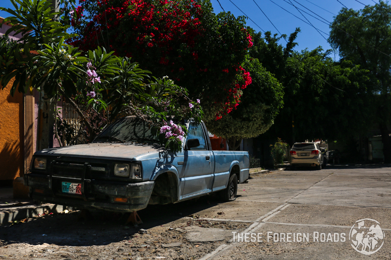 Truck and Flowers