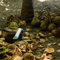 At Least the Coconuts were Free…