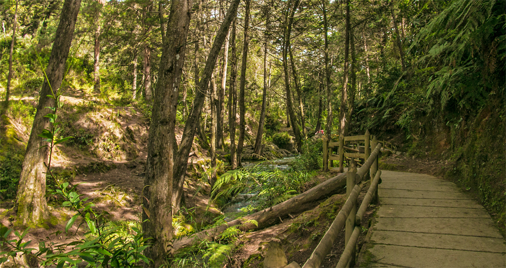 A wooden walkway along a small creek surrounded by green trees