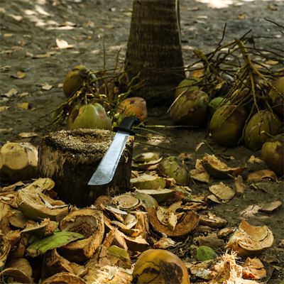 Machete on a tree stump surrounded by coconut husks