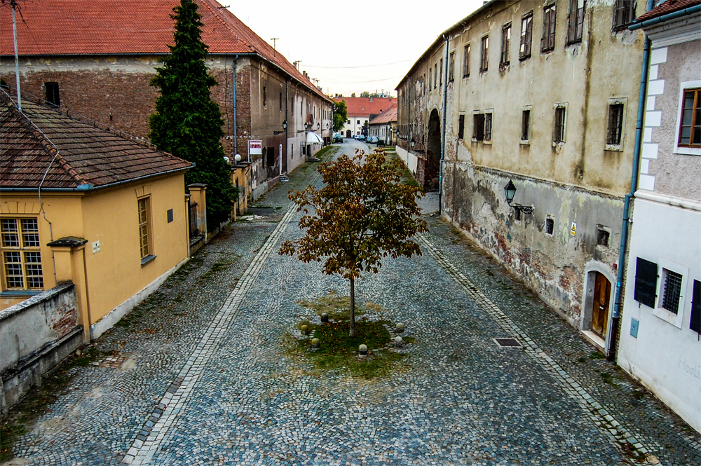 A lone tree is growing in the middle of a cobblestone road
