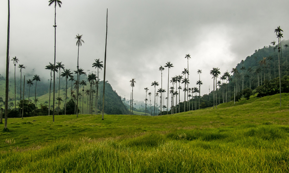 Tall palm tress and large green hills under a dark, cloudy sky. A must on any Colombia travel itinerary!
